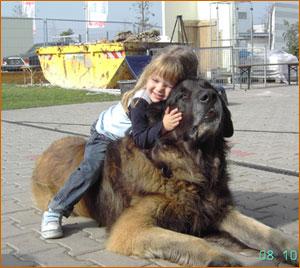 كلاب ضخمة جدا